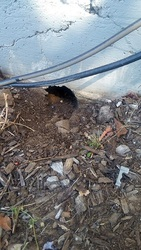 Done Right Rodent Proofing Novato CA